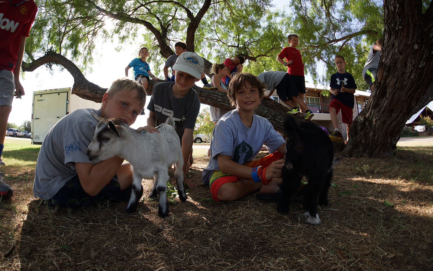 Petting zoo Camp Champions Texas Summer camp activity